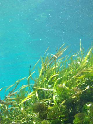 algen-gegen-mundgeruch
